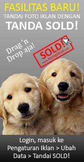 44+ Harga anjing golden puppy terbaru